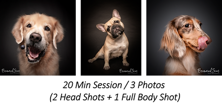 Pet Photography Partnership Package (By Magicdow)