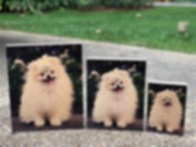 Dog SML.jpg