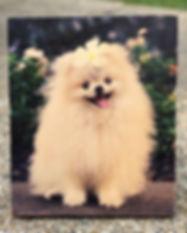 Dog Cover image.jpg