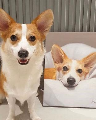 pet portrait oil painting dog corgi brow