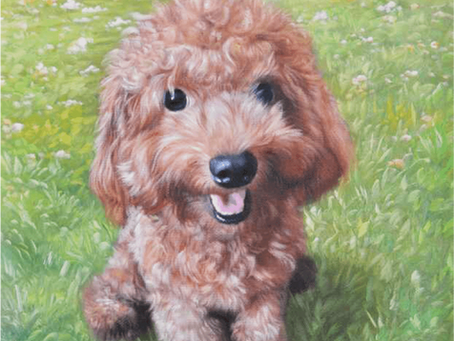 FACTS YOU NEVER KNEW ABOUT: THE POODLE