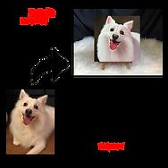 Pet Portrait Oil Painting (Peek-A-Boo St