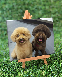 Mini photo on canvas sample.png