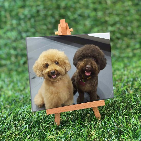 Mini Photo Canvas Print Set