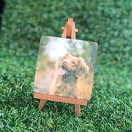 Grass - Mini sample 5 - square.jpg