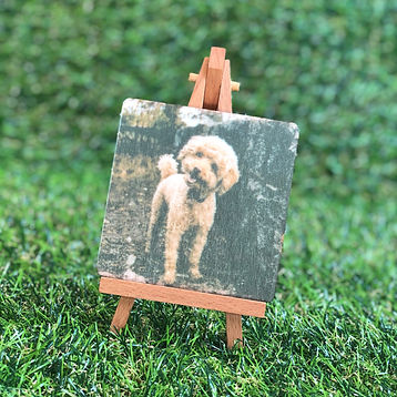 Amber Art Gallery Mini Photo On Wood Sam