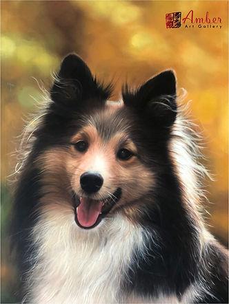 Amber Art Gallery Pet Portrait Oil Paintings - Shetland Sheepdog