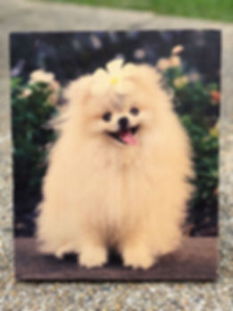 WEBSITE SAMPLE - Dog Cover image.jpg