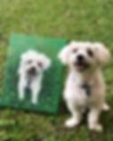 pet portrait oil painting dog maltese wh