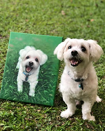 pet portrait oil painting dog maltese wh