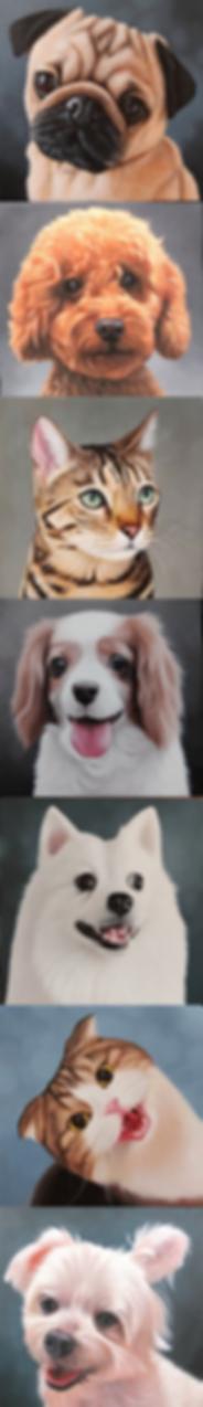Amber Art Gallery Pet Portrait Oil Paint