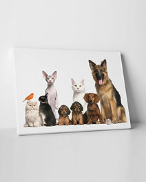 photo on canvas sample pets.jpg