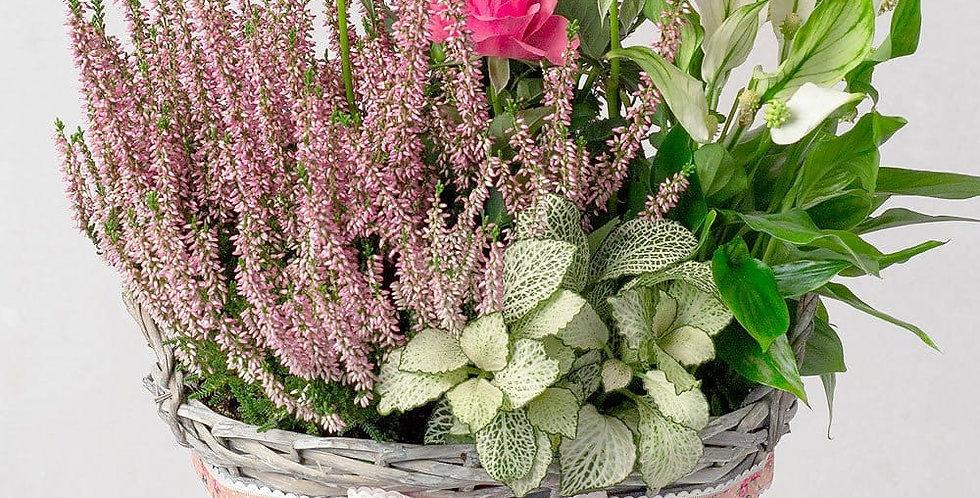 Planted autumn basket