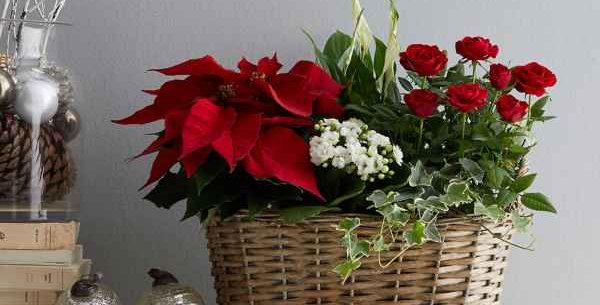 Christmas planted basket