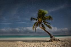 tulum-palmtree-stars-mexico-sina-falker.
