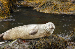 fotoreisen-fotoreise-world-geographic-excursions-island-iceland-robbe-01