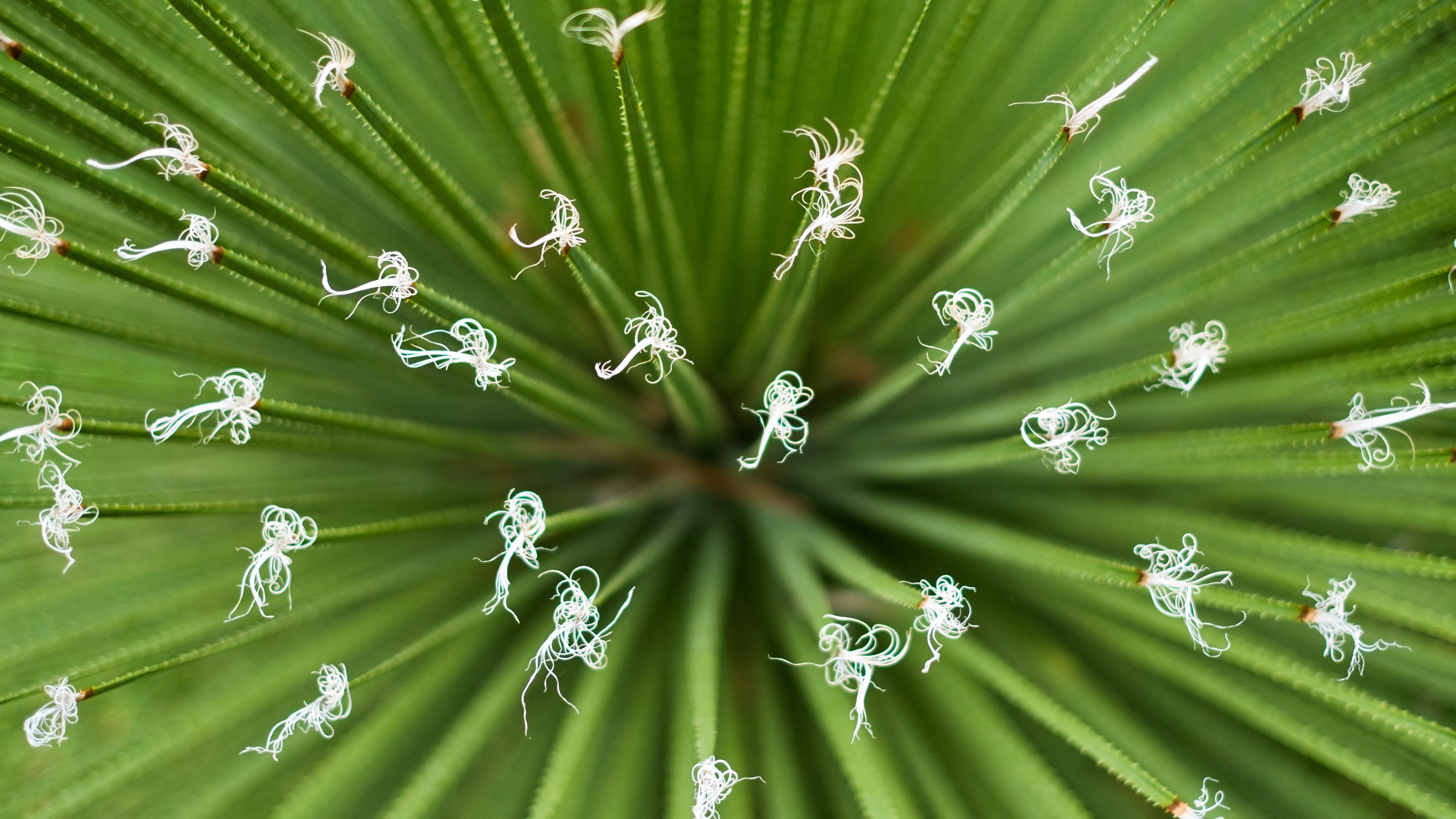 wuschenpflanze (Copy)