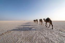 fotoreisen-world-geographic-excursions-aethiopien-djibouti-19