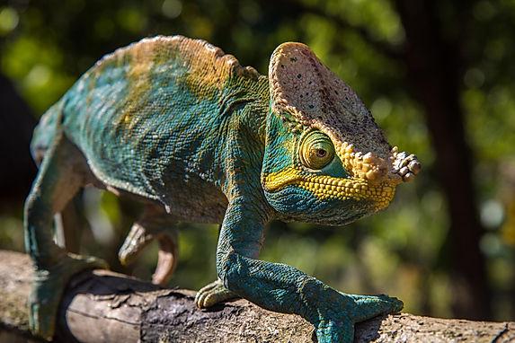Madagascar_2016_D81_9527 (Copy).jpg