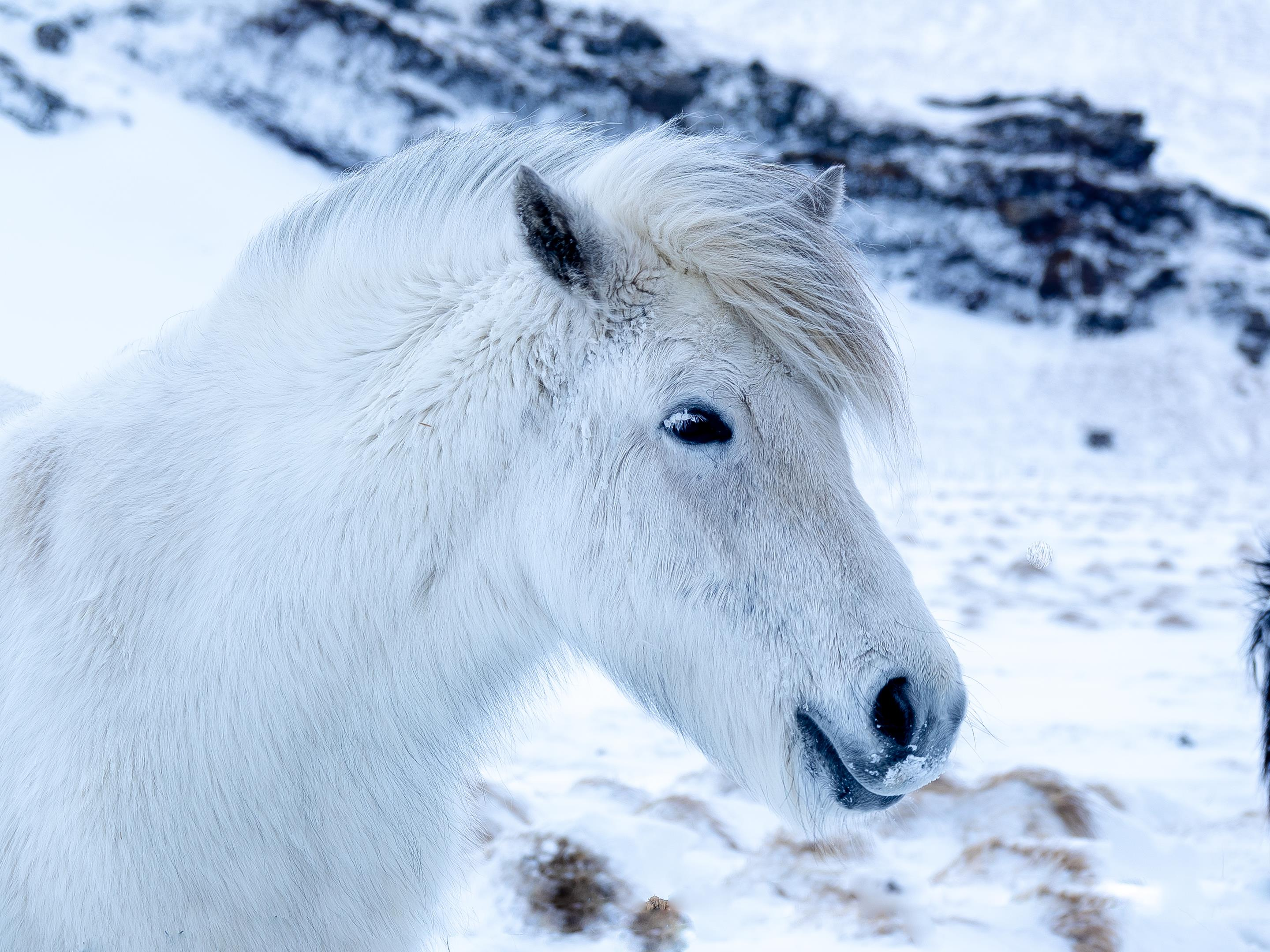 world-geographic-excursions-island-horse