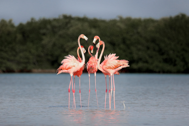 flamingos-rio-lagartos-yucatan-mexico-si