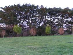 Gisborne boundary trees