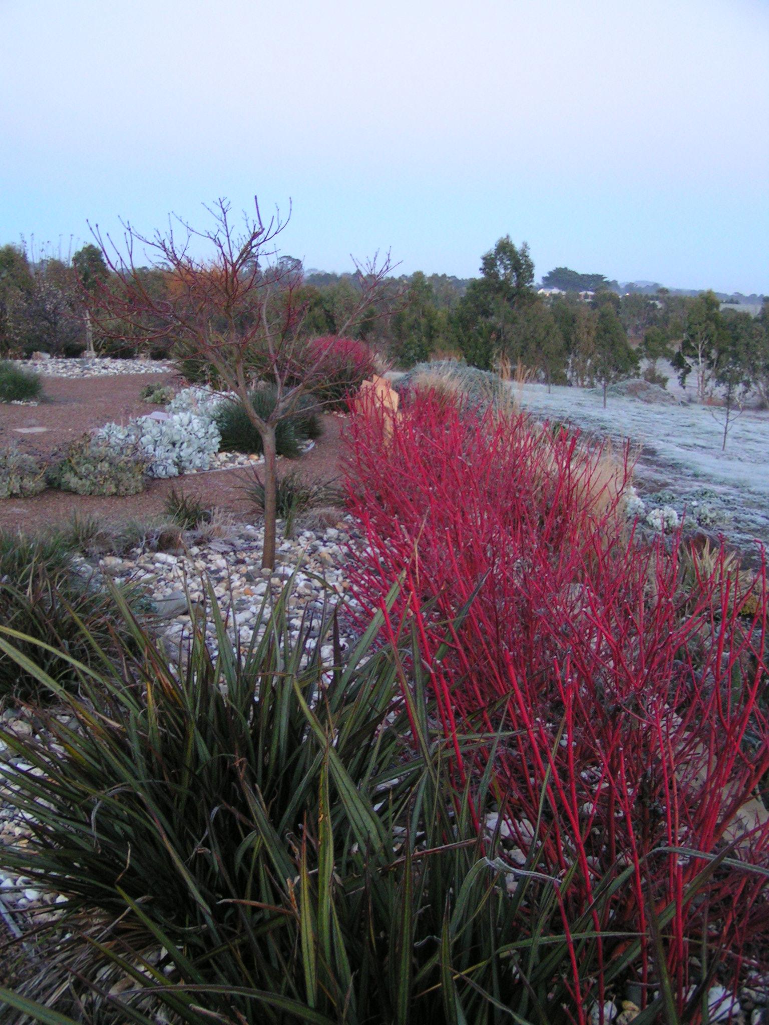 Gisborne dry garden in winter