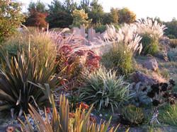 Gisborne dry garden in summer