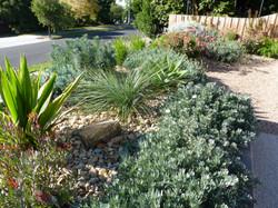 Rosanna dry garden