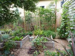 Box Hill vegie garden