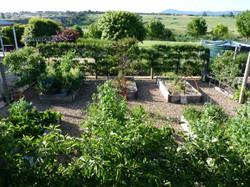 Gisborne formal vegie garden