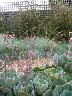 Box Hill dry garden