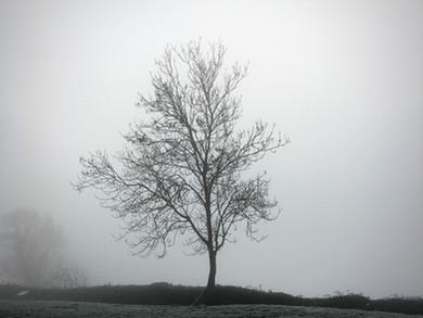 Tree portrait photography