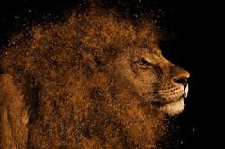 lion-1987792_edited