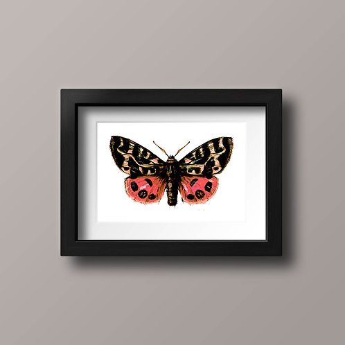 Spectacular Moth, hot pink and salmon pink