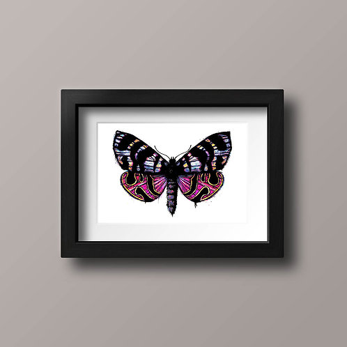 Spectacular Moth, pink, yellow, blue