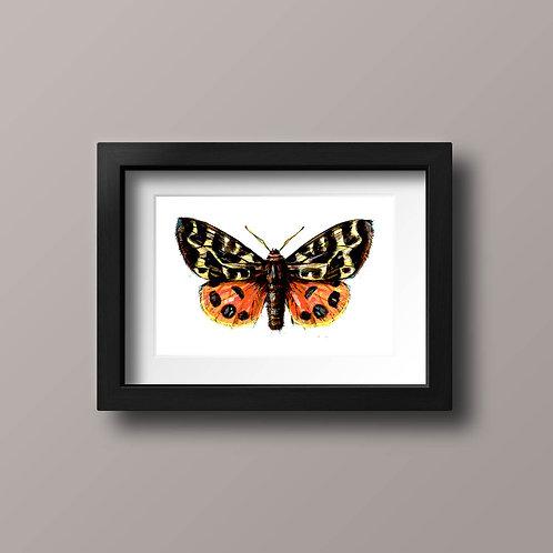 Spectacular Moth, orange and yellow