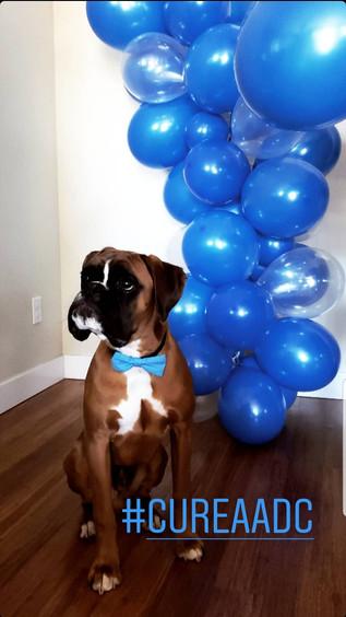 Dog in blue tie.jpg