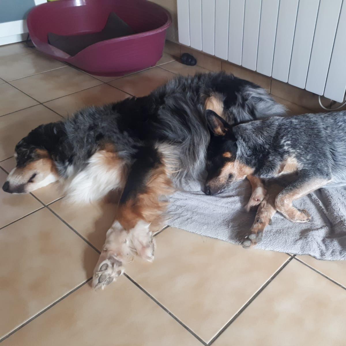 Pension canine familiale