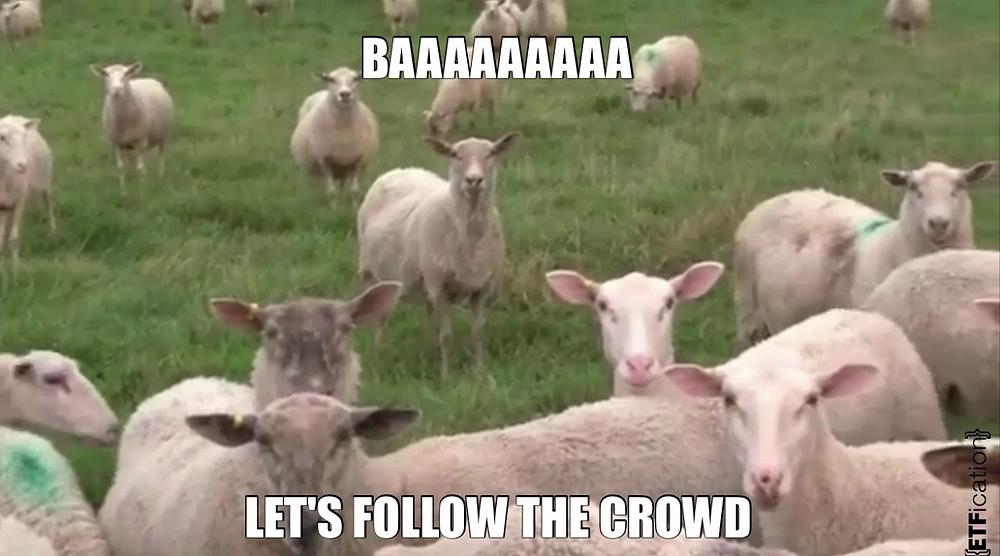 Sheep in field, sheep on farm