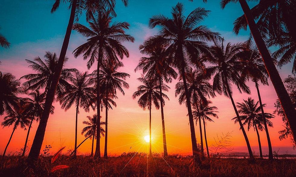 Sunset trees 1 banner.jpg