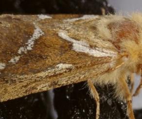 Mai. Insecte de sol- la Louvette