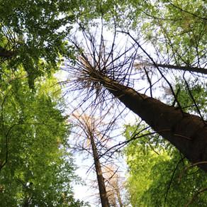 Canicule, sécheresse et conséquences