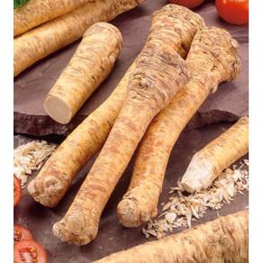 Les légumes oubliés                              Le raifort