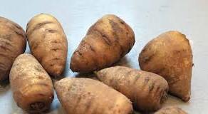 Les légumes oubliés : le cerfeuil tubéreux