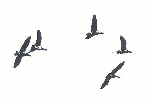 Henri Hiltunen / Birds 3