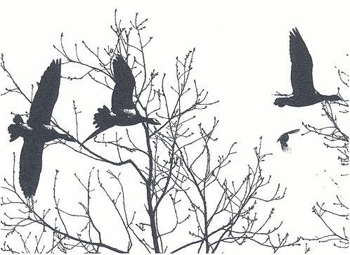 Henri Hiltunen / Birds 4