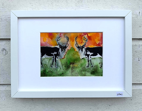 Henri Hiltunen / Reindeers