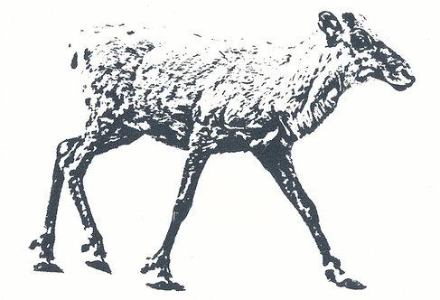 Henri Hiltunen / Reindeer 3