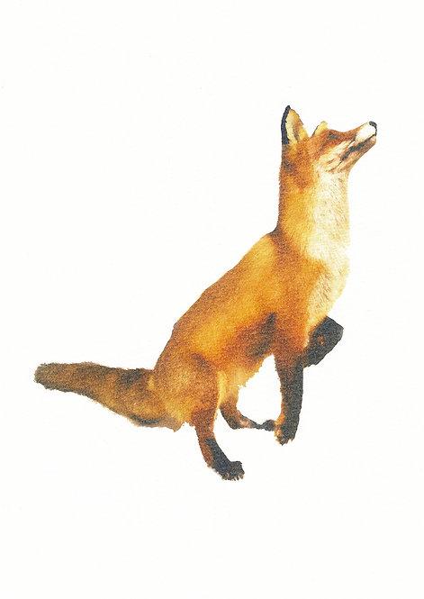 Henri Hiltunen / Fox